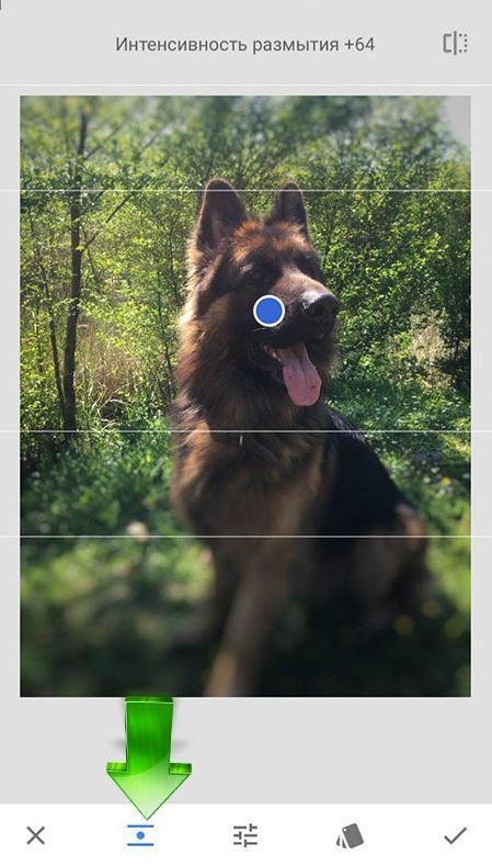 Линейное размытие фона в приложении Snapseed