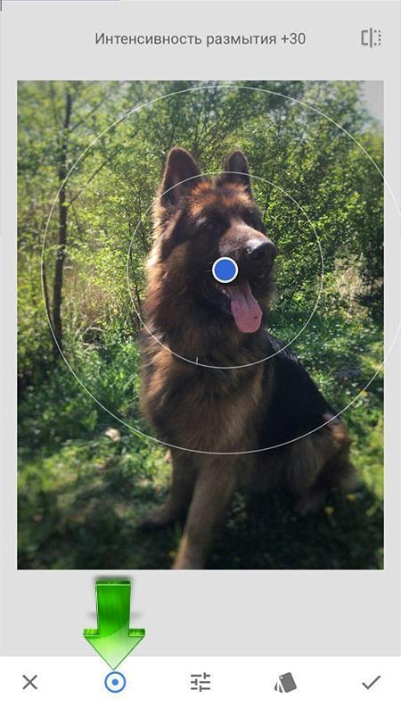 Эллиптическое размытие фона в приложении Snapseed