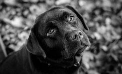 Черно-белая фотосессия: идеи для создания фото